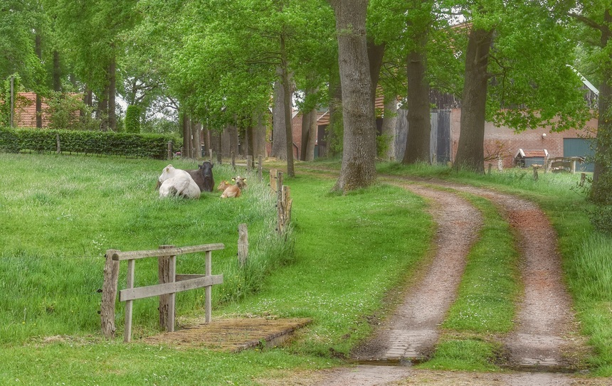 De wandelingen gaan regelmatig over boerenerven.