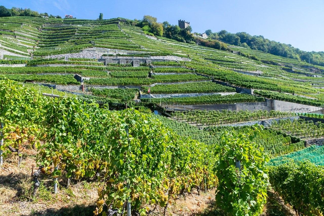 Wijngaardterrassen van Lavaux