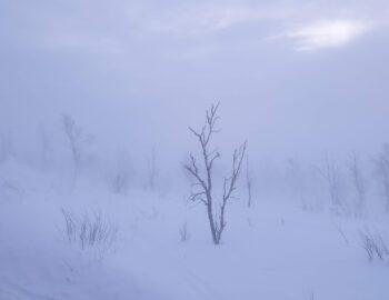 IJzingwekkende schoonheid in winters Zweeds Lapland