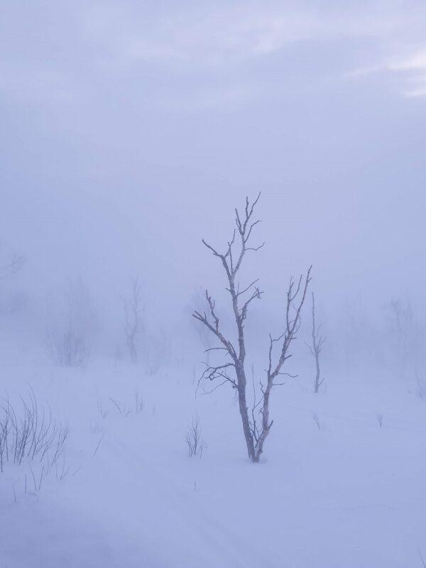 Zweeds Lapland Bjorkliden