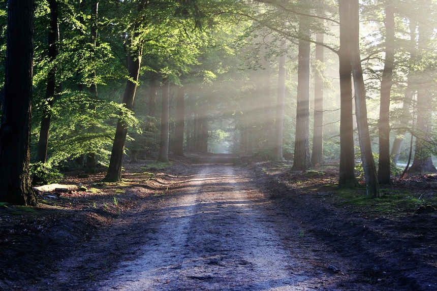 bosweg Nederland
