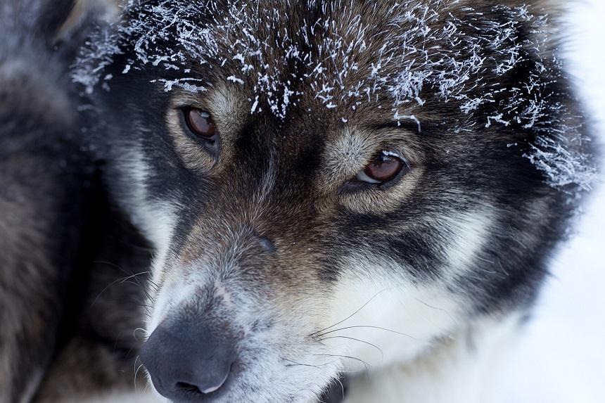 winter vakantie in Fins Lapland