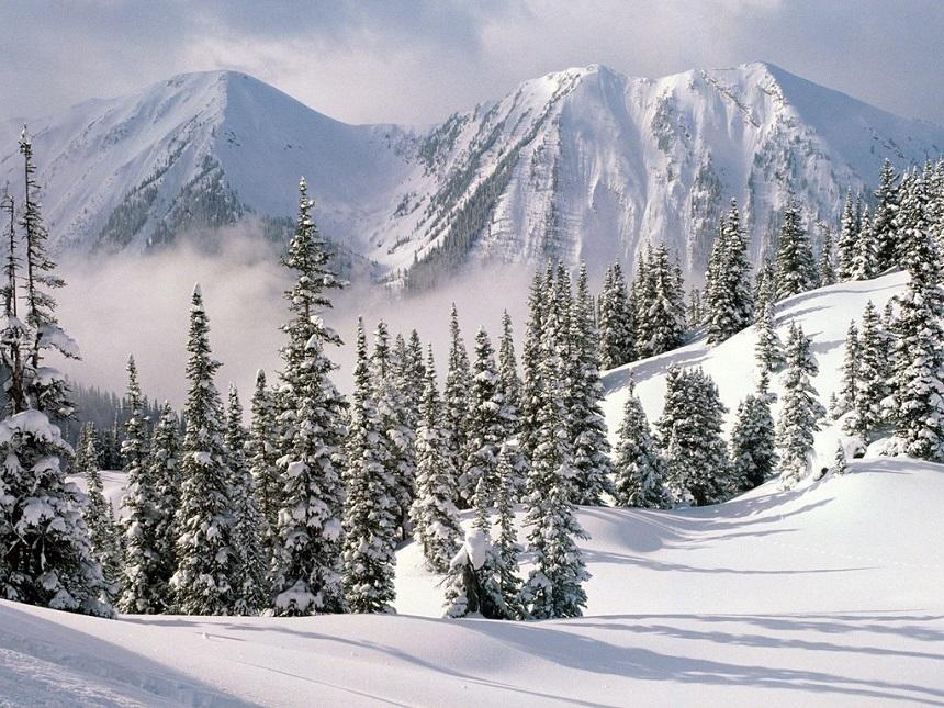 wintersport-canada-amerika-alberta-sneeuw-bomen