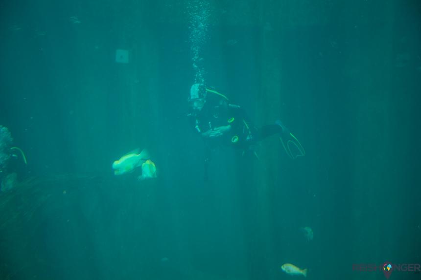 Todi duikbassin