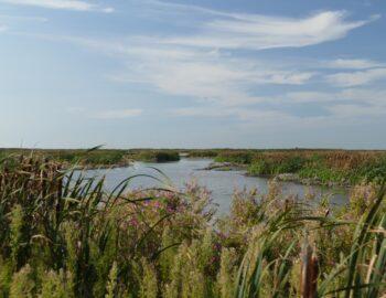 Ontdek de natuur van Flevoland van dichtbij