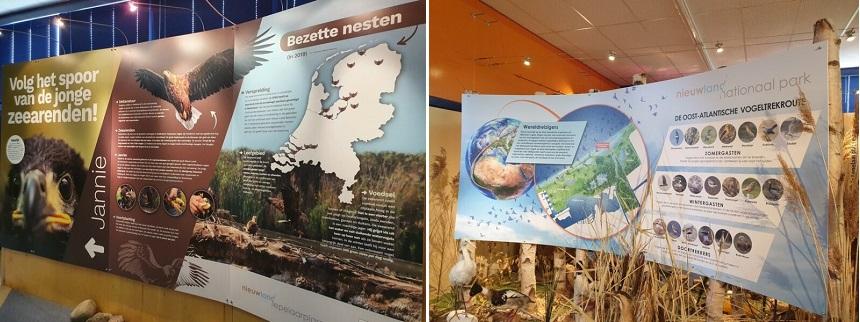 Bezoekerscentrum De Trekvogel - zeearenden en trekvogels