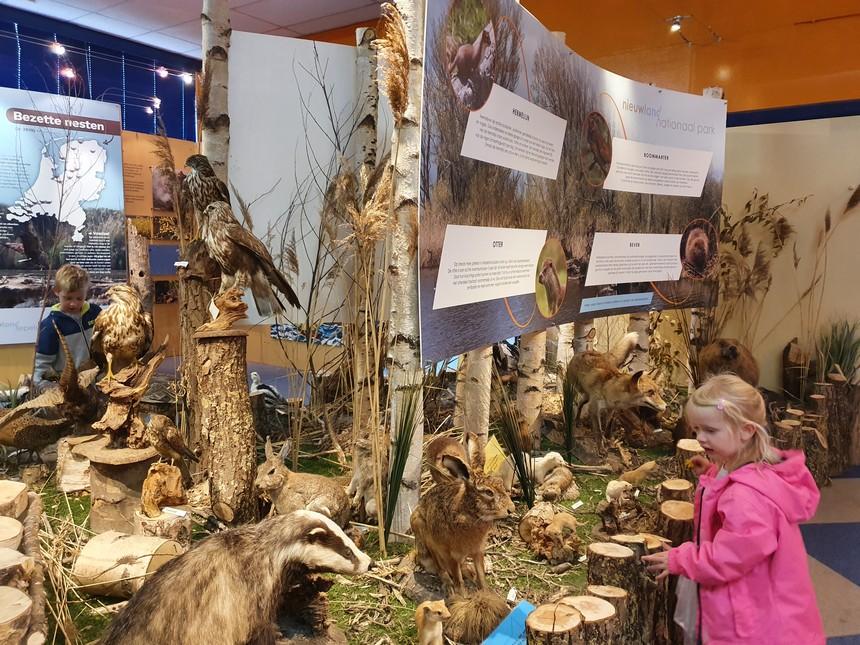 bezoekerscentrum de trekvogel opgezette dieren