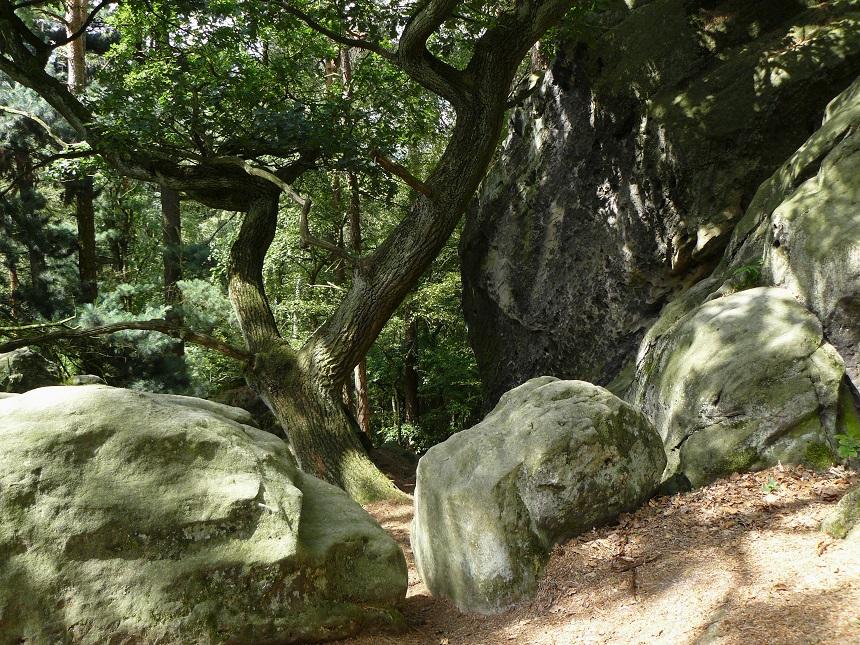 Fraaie rotspartijen in het Teutoburgerwald