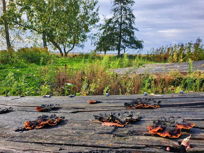 tiengemeten aardappelloods paddestoelen