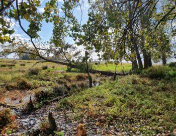 Natuureiland Tiengemeten: door weelde en wildernis
