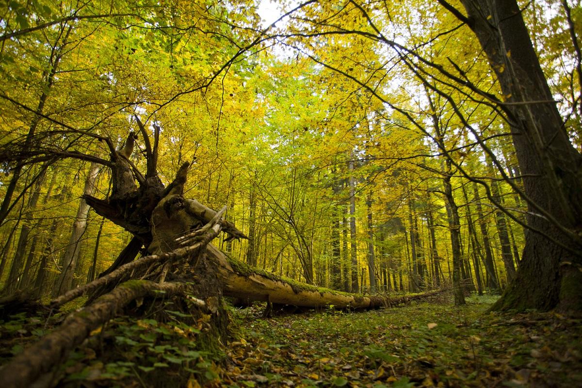 Białowieża National Park in Podlaskie
