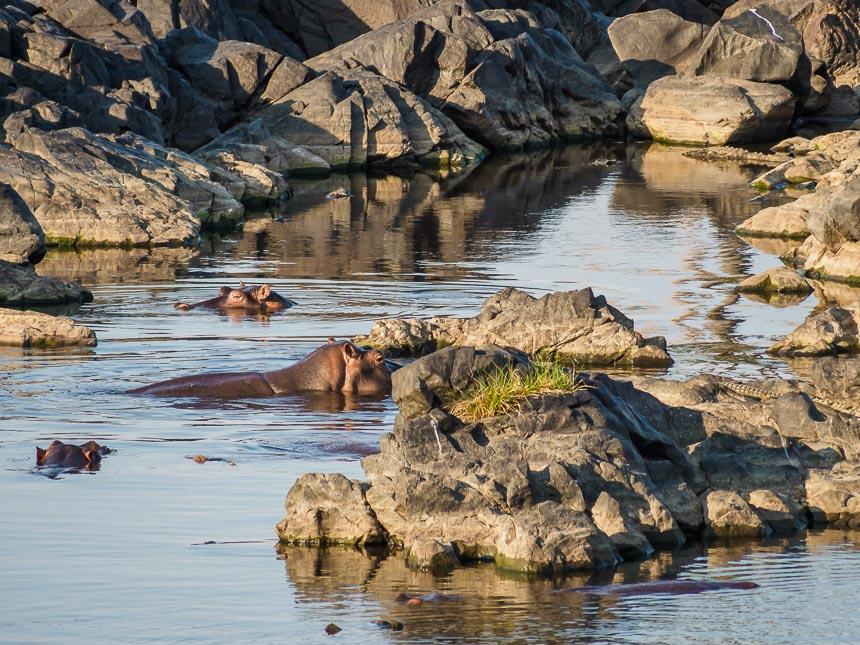 Op Safari in Ruaha - Nijlpaarden en krokodillen