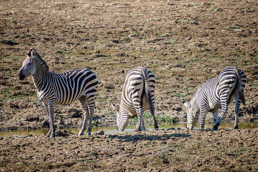 Een reis langs onbekende wildparken door Zambia, Malawi en Tanzania