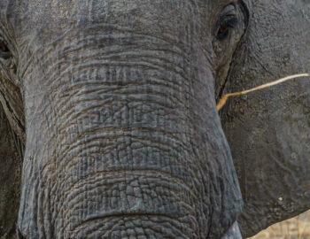 3x onbekende wildparken in Afrika