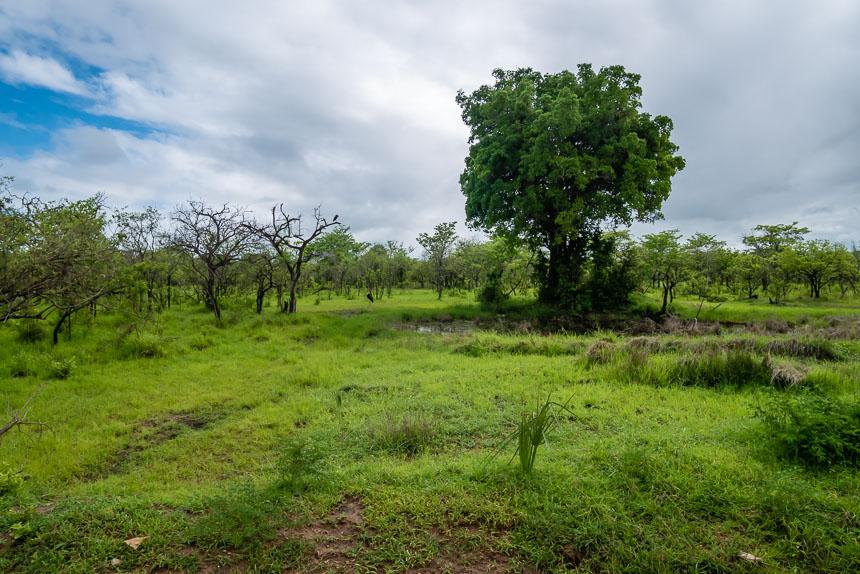 Door dit landschap doe je in Selous je safari