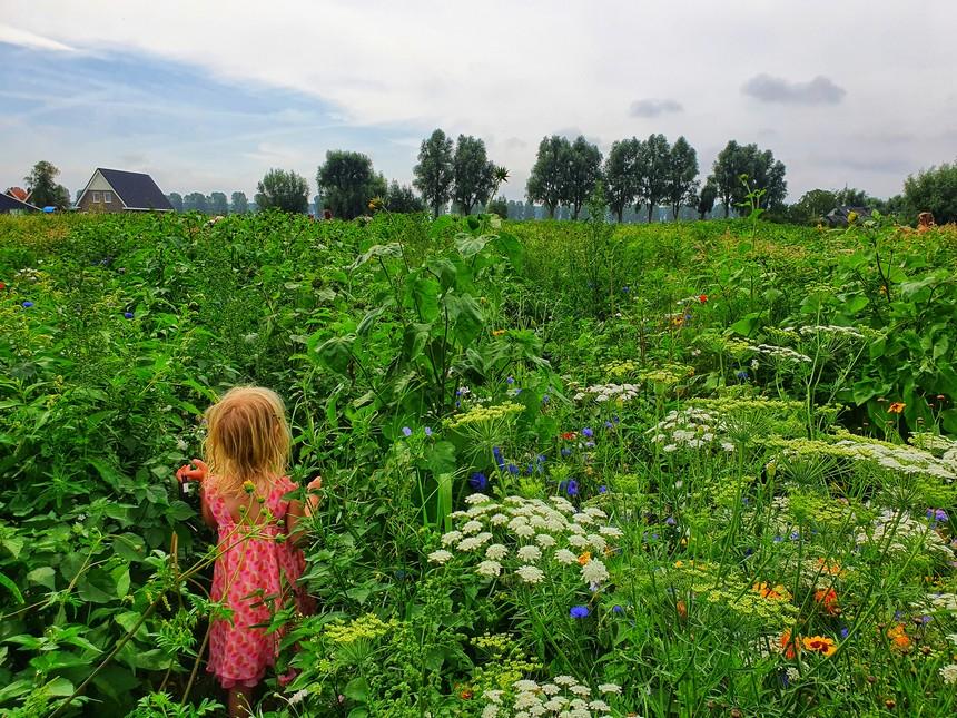 Bloemen pluktuin Dordrecht
