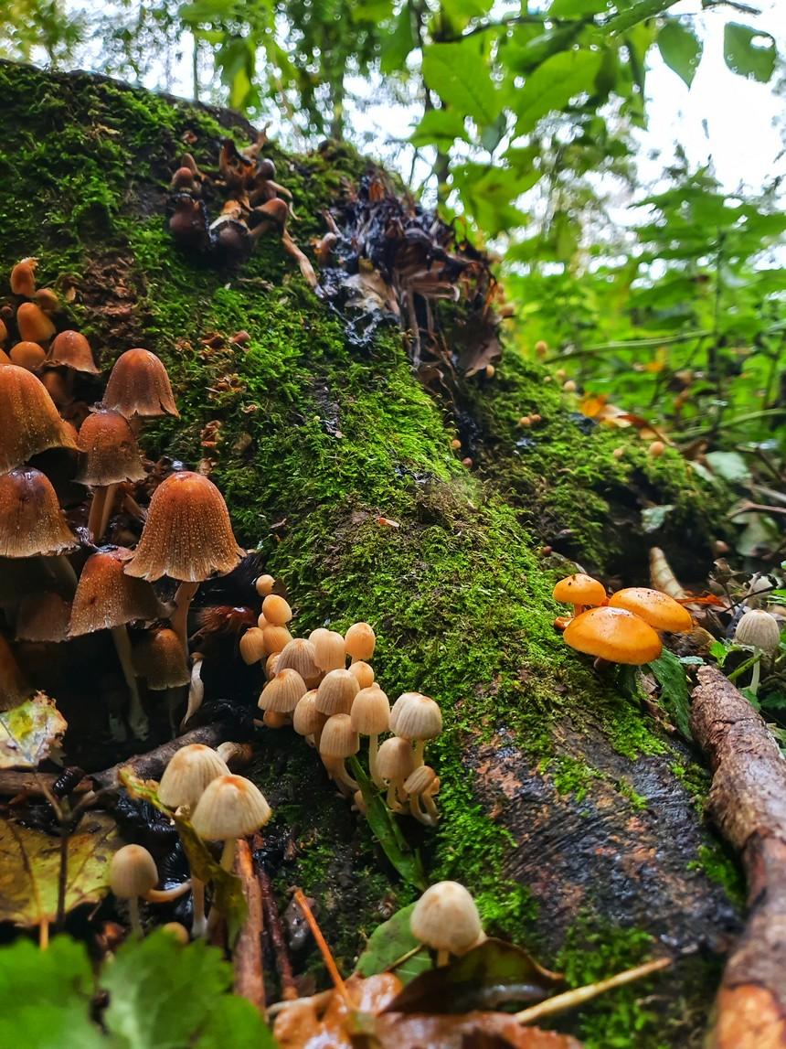 Paddenstoelen in de Biesbosch - herfst in NLDelt