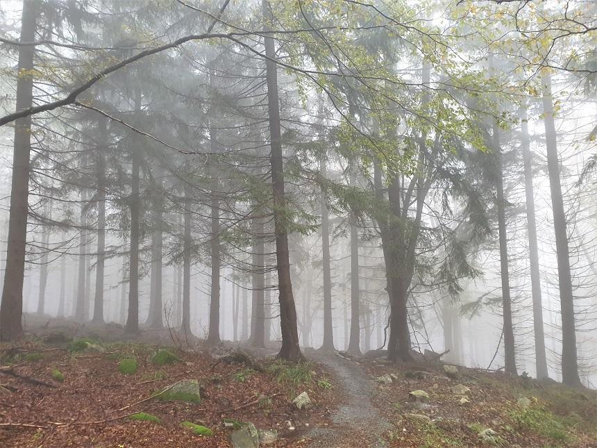 Bossen bij Czarna Gora Neder-Silezië