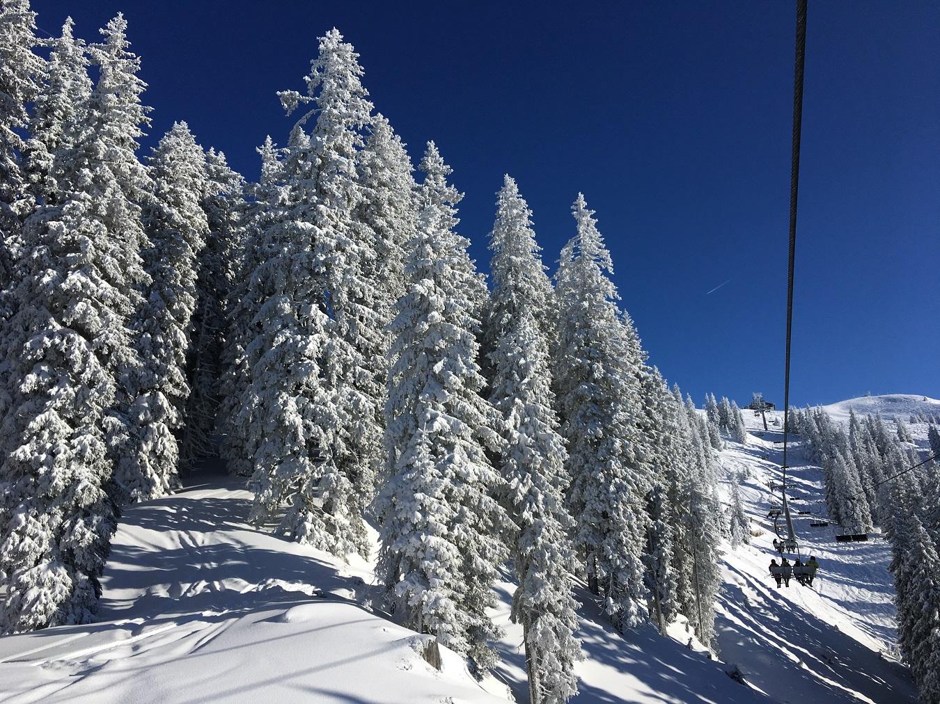 Besneeuwde bomen Oostenrijk