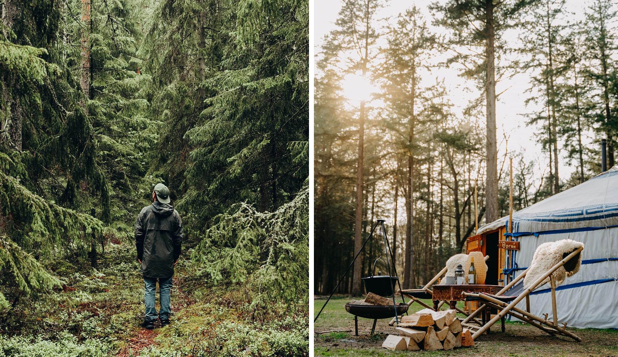 Nordic woods Sweden