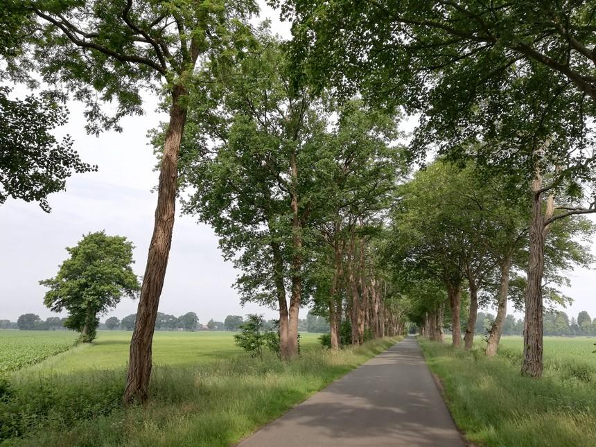 Langs de Westweg in Duitsland vlak achter de grens tussen Hasseberg en Ter Apel