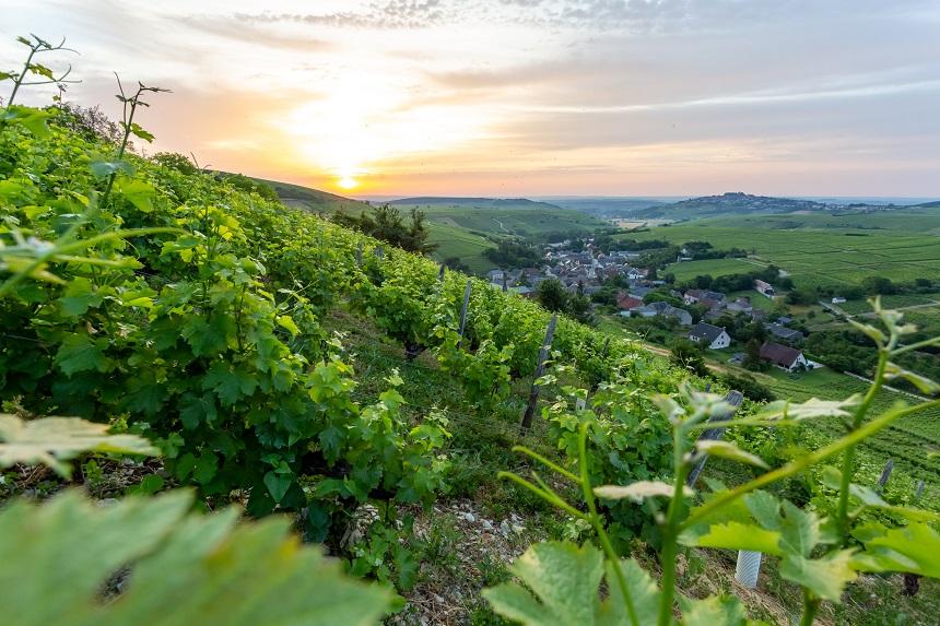 Vignoble du Sancerrois, de wijngaarden van Sancerre - Yoann Hervet