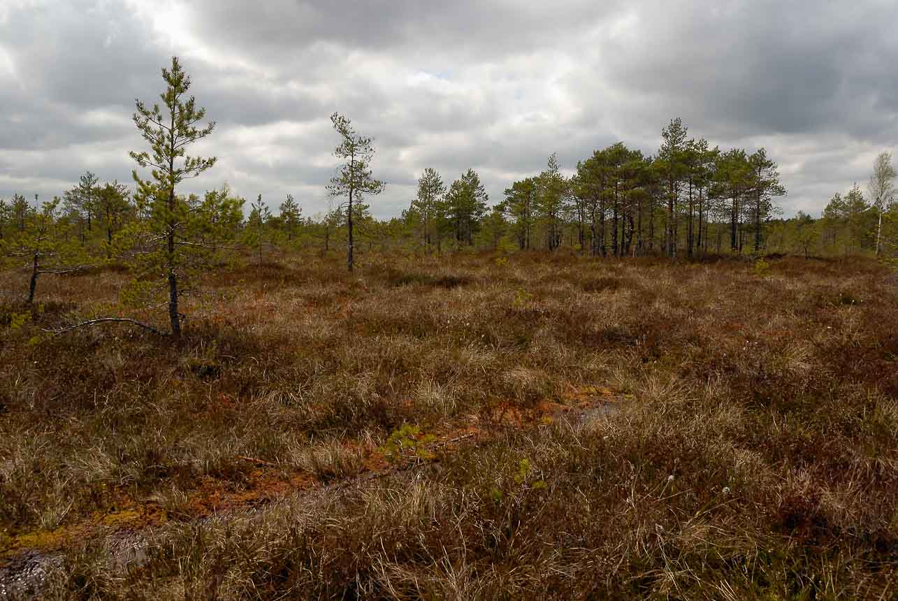 De Kemiri moeraslanden - roadtrip Baltische staten