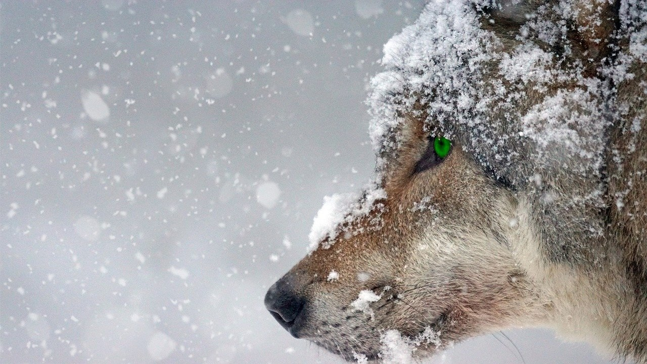 tips winterfotografie